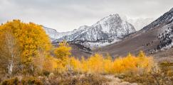 Fall Colors in Eastern Sierra Foothills