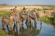 Mahouts take their elephants to water after the rhino safari, Assam, India