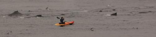Kayaker takes risk close to whale pod