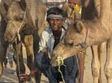 Camel Herder At The Watering Hole Pushkar India
