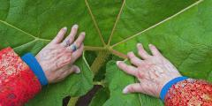 Comparison of Colors and Textures - Hands on a Large Leaf