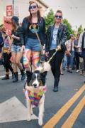 Dog dressed in the spirit for a San Francisco Pride Parade Event on Valencia Street, June, 2017.