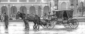 Horse & Carriage wait in rain