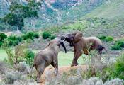 African Elephants.  Elephants are highly social animals that form close bonds and family units.