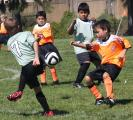 AYSO competition, mesmerized by a ball named Tim