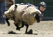 Mutton Bustin at the Rodeo