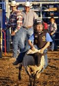 Lamb Riding Competition at CA State Fair